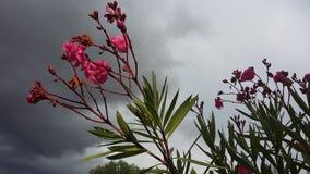 Flores en la tormenta imagen de archivo