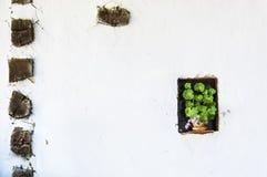 Flores en la ventana Imágenes de archivo libres de regalías