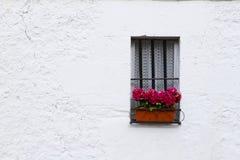 Flores en la ventana Imagen de archivo libre de regalías