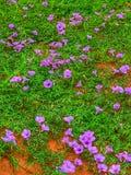 Flores en la yarda foto de archivo