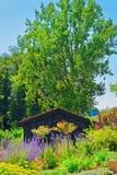 Flores en la yarda interna de Yverdon en Suiza imagenes de archivo