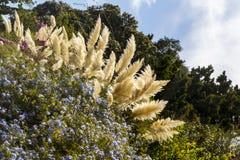 Flores en las colinas en Toscana en Italia fotografía de archivo
