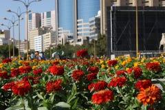 Flores en las floraciones del jardín fotos de archivo