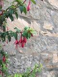 Flores en las hojas rojas del verde de la pared Foto de archivo