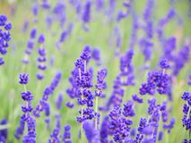 Flores en las maderas Fotografía de archivo