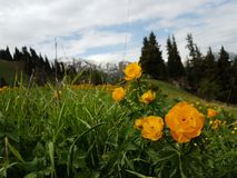 Flores en las montañas imagen de archivo