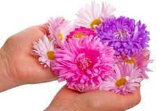 Flores en las palmas Fotografía de archivo libre de regalías