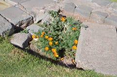 Flores en las ruinas fotografía de archivo