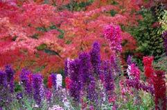 Flores en los jardines de Butchart Fotografía de archivo libre de regalías