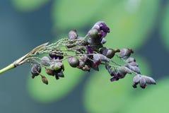 Flores en los parques Foto de archivo libre de regalías