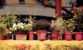 Flores en los potes Fotos de archivo