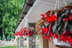Flores en los potes que cuelgan debajo del tejado de la casa decorating imagen de archivo