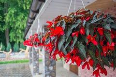 Flores en los potes que cuelgan debajo del tejado de la casa decorating fotografía de archivo libre de regalías