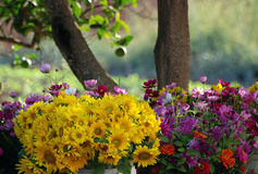 Flores en luz de la mañana Fotos de archivo libres de regalías