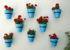 Flores en maceta en la pared Fotografía de archivo