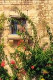Flores en Malta Imágenes de archivo libres de regalías