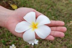 Flores en manos Flores hermosas en las manos de la mujer foto de archivo