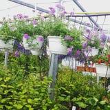 Flores en mercado Fotos de archivo libres de regalías