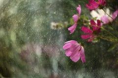 Flores en mi jardín, tomado después de la lluvia fotografía de archivo