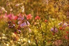 Flores en mi jardín, tomado después de la lluvia fotos de archivo