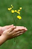 Flores en mis manos Fotos de archivo