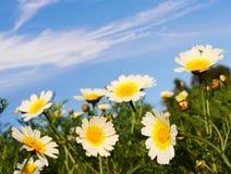 Flores en naturaleza Imágenes de archivo libres de regalías