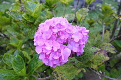 Flores en naturaleza Fotografía de archivo libre de regalías