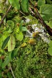 Flores en naturaleza en fondo verde imagen de archivo libre de regalías