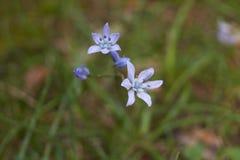 Flores en naturaleza muy bastante imágenes de archivo libres de regalías
