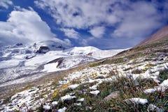 Flores en nieve contra las montañas nevadas Imagen de archivo