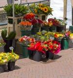 Flores en parada del mercado Foto de archivo libre de regalías