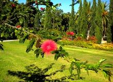 Flores en parque asoleado Fotografía de archivo libre de regalías