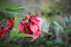 Flores en parque del paramatta fotos de archivo libres de regalías