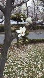 Flores en parque en Corea del Sur Imágenes de archivo libres de regalías