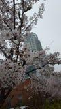 Flores en parque en Corea del Sur Foto de archivo libre de regalías