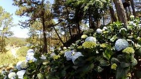 Flores en parque almacen de metraje de vídeo