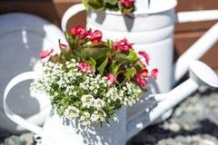 Flores en poder de riego fotografía de archivo