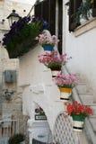 Flores en polignano Fotos de archivo libres de regalías