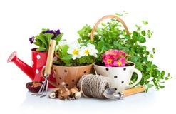Flores en pote con los utensilios de jardinería Imágenes de archivo libres de regalías