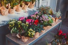 Flores en potes afuera Fotos de archivo