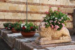 Flores en potes cerca de la escultura de piedra de un león Fotos de archivo