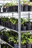 Flores en potes con el suelo para trasplantarlos a sus áreas personales En los estantes de muchas diversas variedades fotos de archivo libres de regalías