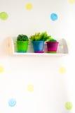 Flores en potes con las cajas de color en estantes en fondo de la pared imagen de archivo libre de regalías
