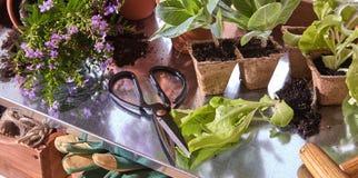 Flores en potes con las tijeras en estante Fotografía de archivo