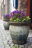 Flores en potes de la calle imagen de archivo libre de regalías