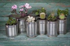 Flores en potes de latas Imagen de archivo