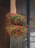 Flores en potes del tapiz Fotografía de archivo libre de regalías
