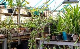 Flores en potes en el invernadero Imágenes de archivo libres de regalías
