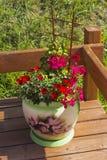 Flores en potes en la terraza Imágenes de archivo libres de regalías