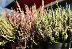Flores en potes en la ventana Imágenes de archivo libres de regalías